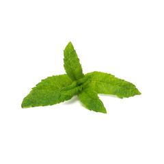 Fresh raw mint leaves