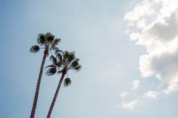 Two palm trees against clear sky during sunny day, copy space