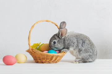 bunny with easter eggs on white background