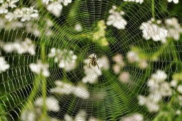 spider web in garden