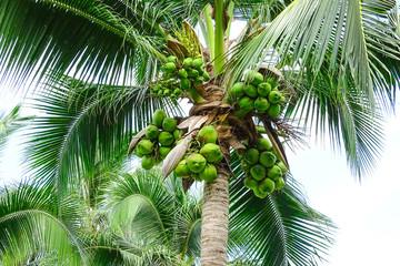 열대 휴양지 야자수 나무 백그라운드 사진 이미지