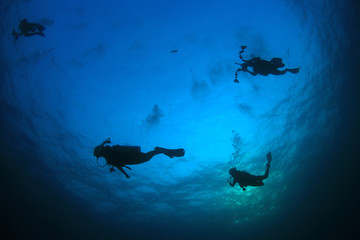 Scuba divers, fish and coral reef underwater