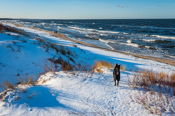 Seascape with snow covered sandy beach, dunes and the dog admire the scenery.  Carnikava seaside promenade. Latvia. Baltic.
