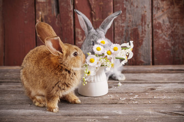 bunnyes with spring flowers on old wooden background