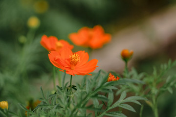 orange flower macro shot