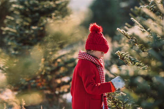 Girl standing in a field choosing a Christmas tree, United States