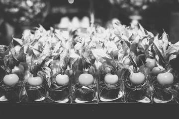 High candy confectionery for events, wedding candy or chic parties.
