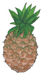Delicious, sweet  Pineapple, watercolor illustration