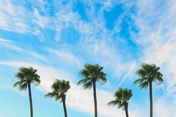 tropical palm tree with sun light on blue sky. Summer vacation and  travel concept. Vintage tone filter effect color style.Copy space