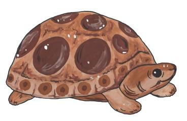 Cartoon, cute, brown turtle, watercolor illustration