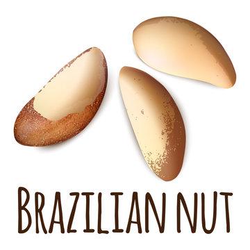 Brazilian nut icon. Realistic illustration of brazilian nut vector icon for web design isolated on white background