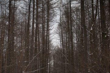 Beautiful nature of winter forest