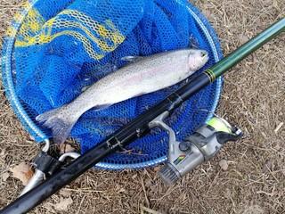 pescare la trota in acqua dolce