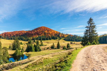 sunny forenoon in autumn in mountains. beautiful landscape with beech forest in red foliage on the hill. green spruce trees in the valley near the pond. country road on the right. wonderful journey