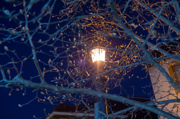 Light on branches at winter night
