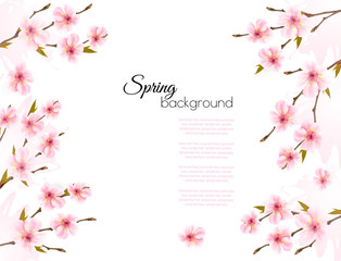 Wall Mural - Sakura japan cherry branch with a pink flowers background. Vector