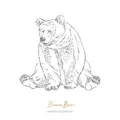 Vector illustration of sitting brown bear forest animal Hand drawn ink realistic animal sketching isolated on white. Perfect for logo branding colourig book design.
