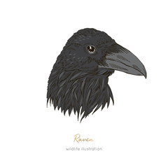 Vector profile portrait illustration of raven bird Hand drawn ink realistic animal sketching isolated on white. Perfect for logo branding colourig book design.