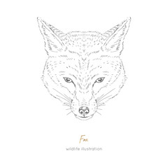 Vector symmetrical portrait illustration of fox forest animal Hand drawn ink realistic animal sketching isolated on white. Perfect for logo branding colourig book design.
