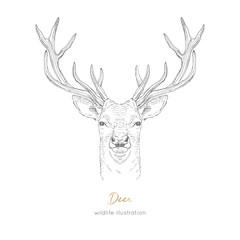 Vector symmetrical portrait illustration of deer forest animal Hand drawn ink realistic animal sketching isolated on white. Perfect for logo branding colourig book design.