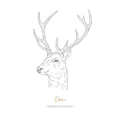 Vector profile portrait illustration of deer forest animal Hand drawn ink realistic animal sketching isolated on white. Perfect for logo branding colourig book design.