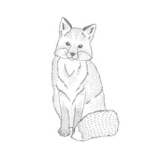 Vector decorative illustration of sitting happy fox forest animal Hand drawn decorative image isolated on white. Perfect for kids textile t-shirt colourig book design.