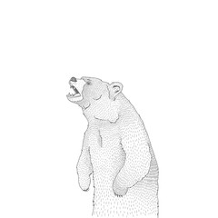 Vector decorative illustration of roaring brown bear forest animal Hand drawn decorative image isolated on white. Perfect for kids textile t-shirt colourig book design.