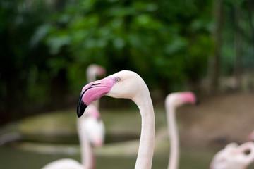 Close up photography of a pink flamingo bird