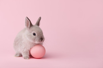 Easter bunny with egg on pink background
