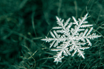 Snowflake on a defocused background - macro photo
