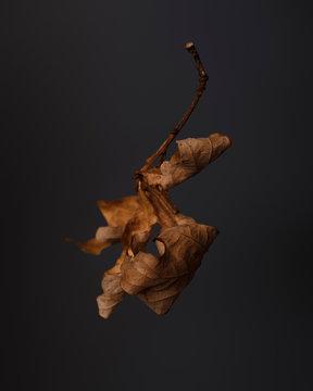 Closeup of dry leaf on dark background