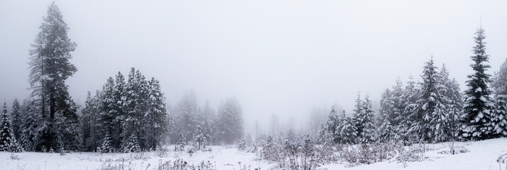 Panoramic View of Pine Trees in the Fog in Winter Fotobehang