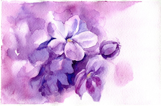Watercolor illustration with purple flowers. Hand drawn picture and texture about lilac blooming in spring. Floral postcard in watercolor style. Violet, pink painted background, wallpaper and banner.