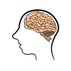 Anatomically correctly outline of human brains. The picture for textbooks with anatomy.  vector illustration of human brain on white background. The contour of the human head and brain