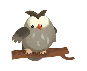 cartoon scene with owl animal on white background - illustration for children