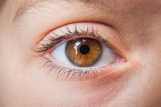 Closeup of child's eye, brown