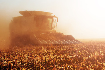Fototapete - A photo of a field during harvest