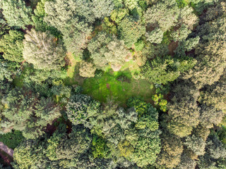 natural landscape. aerial top view of green park trees