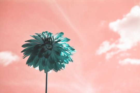 Green flower on a pink sky background