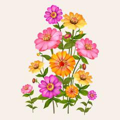 Zinnia flowers illustration