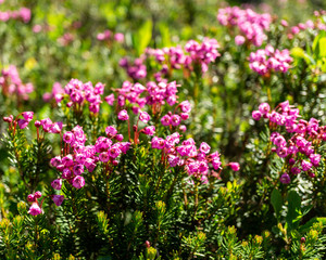 Wild meadow flowers as a floral nature background.