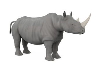Rhinoceros Isolated