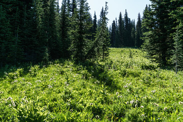 Beautiful view of mountains meadow in summer season Sunny weather blue sky and green forest background