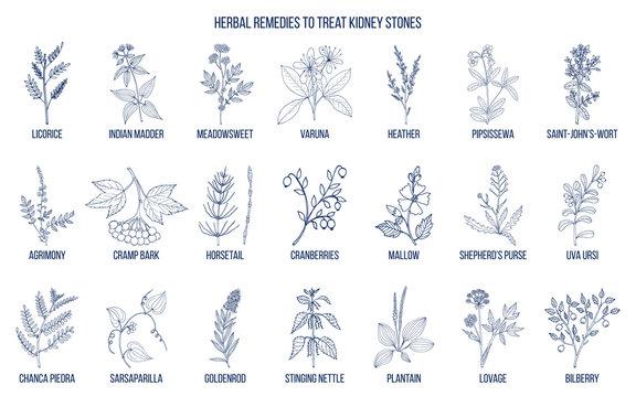 Best herbs for kidney stone disease