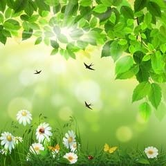 Spring background with flowers and swallows.