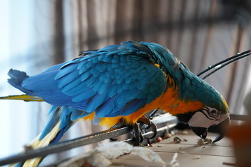 Door stickers Parrot Macaw ara papegaai