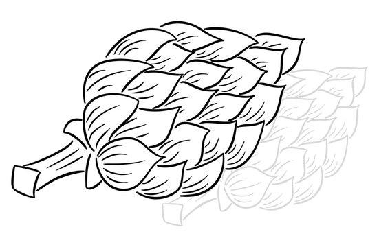 drawn cartoon artichoke