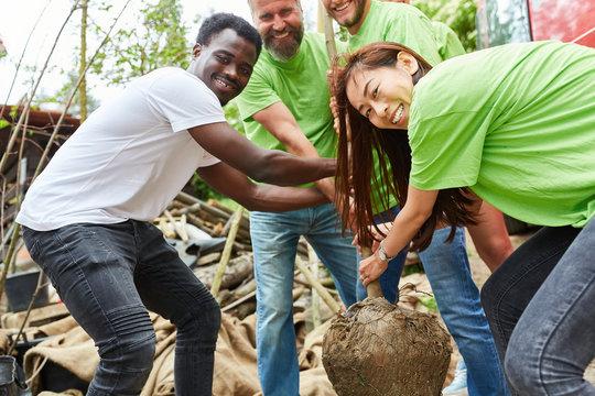 Junges Team Freiwilliger pflanzt einen Baum