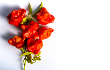 Bishop's crown flower shaped decorative peppers