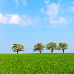 Frühling, Bäume, Reihe, Landschaft